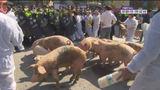 세종청사 앞 돼지 시위…ASF가 불러 온 '잔반 사료' 논란