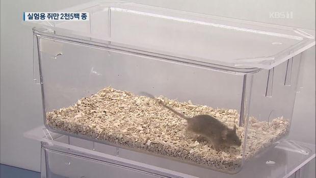 혐오 대상 쥐, 과학계에선 보물!